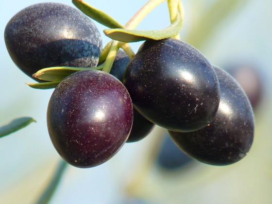 organic Greek olives natural foods
